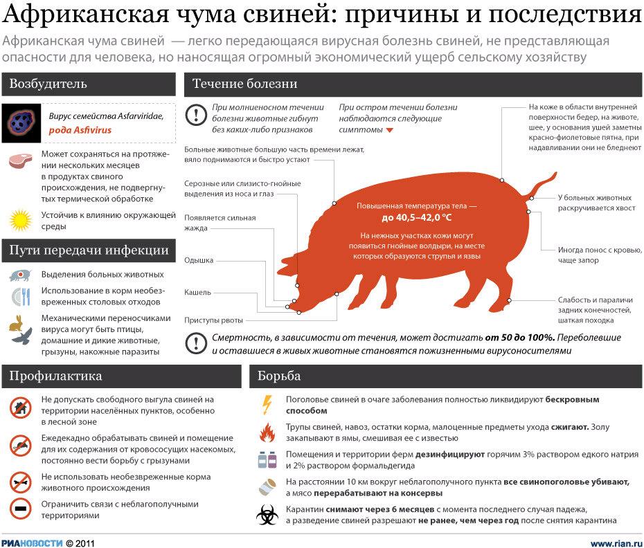 Африканская чума свиней:причины и последствия