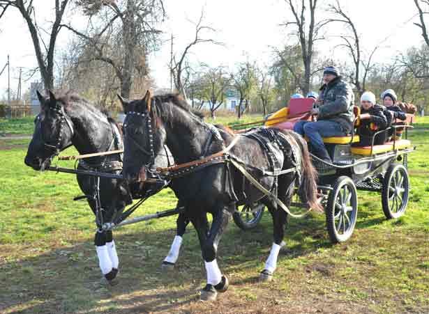 """Вот такие красивые лошади катали всех желающих на празднике, газета """"Единство"""", Павловский район"""