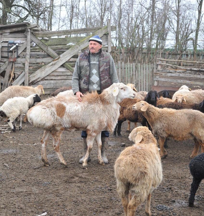 Потомственный овцевод