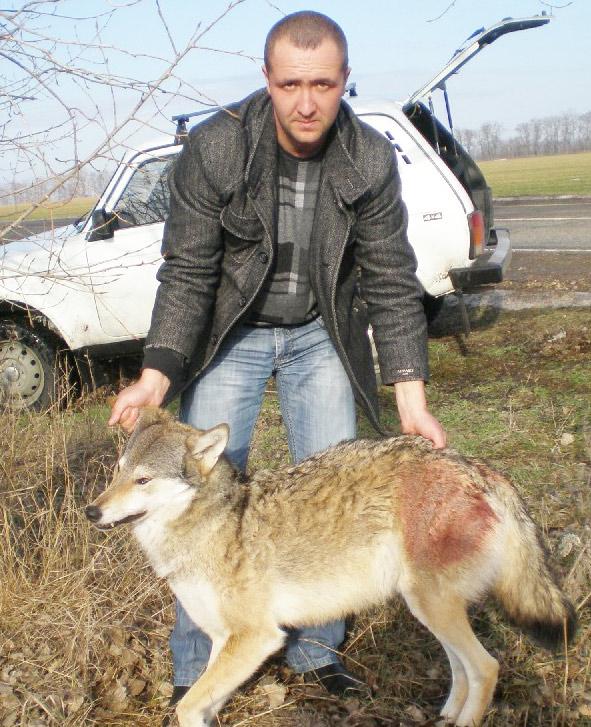 Инспектор Сергей Лобко и убитый волк.