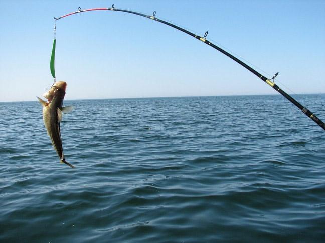 Приглашаем на соревнования по рыбной ловле