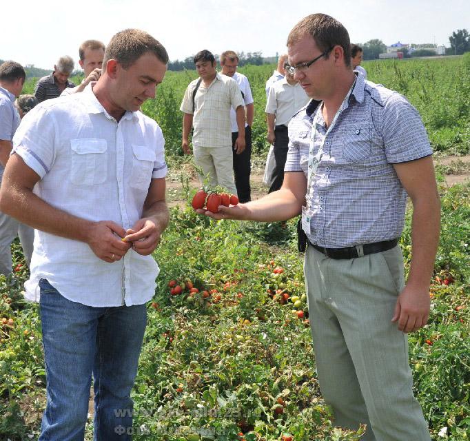 Есть о чем поговорить начальнику отдела овощеводства ЗАО «Колос» Александру КАЛЮЖНОМУ и главному агроному «Агросемцентра» Александру СИДОРИНУ