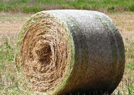 Два рулона сена