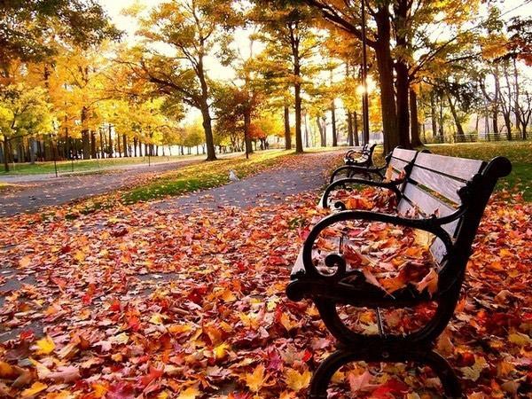 Люблю краски осени