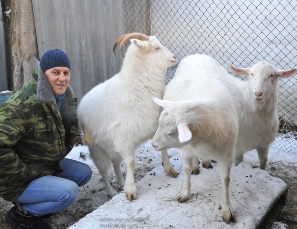 Валерий РОЙ и его питомцы – козы зааненской породы