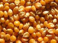 Украли кукурузное зерно
