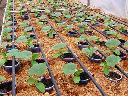 Обучение тепличному овощеводству