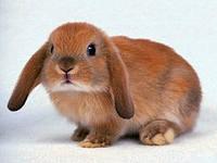 Обучение кролиководству