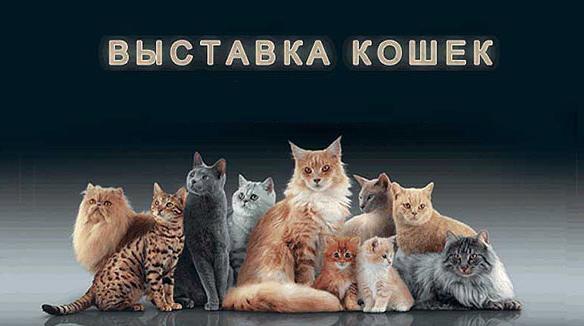 Приглашаем на выставку кошек