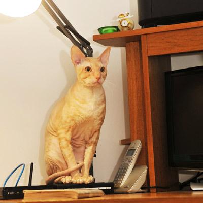 Кошки не похожи налюдей, кошки – это кошки