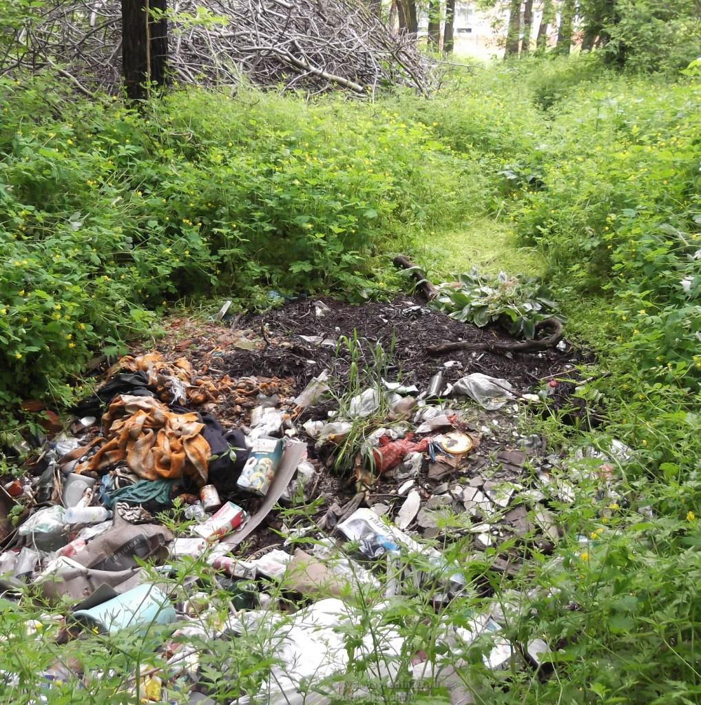 Лесопосадка вдоль улицы Толстого. Натоптанная дорожка ведёт к яме, полной отходов.